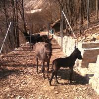 Životinje - Eko centar Bočac jezero